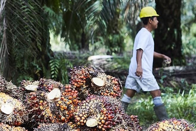 Le géant Unilever s'associe à Google pour stopper la déforestation qu'il crée par son activité