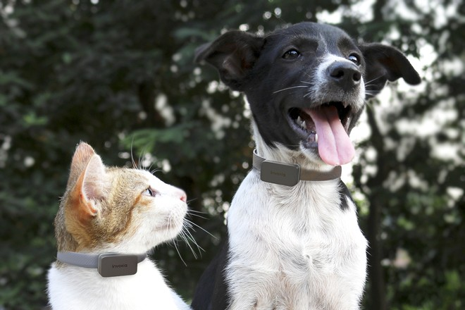 Des chiens et des chats connectés télésurveillés par leurs vétérinaires
